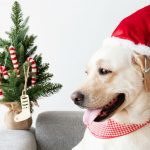 4 Holiday Traditions for You and Your Pup