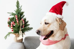 pet holiday traditions