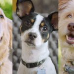 Everything You Need to Know About the Dogtopia Foundation