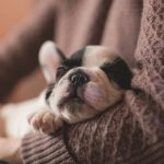 How To Help Your New Puppy Adjust to Your Home