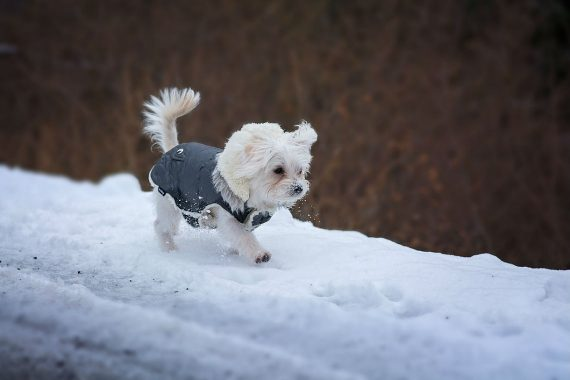 dog-too-cold