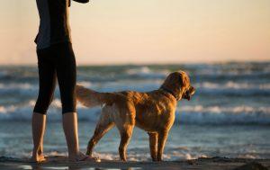 Dog Around Water on Beach