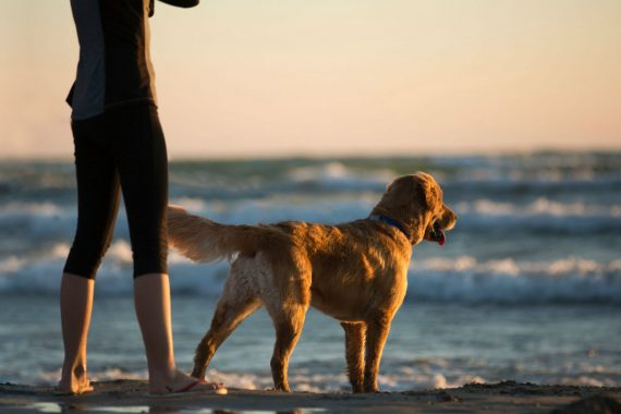 How to Keep Your Dog Safe Around Water