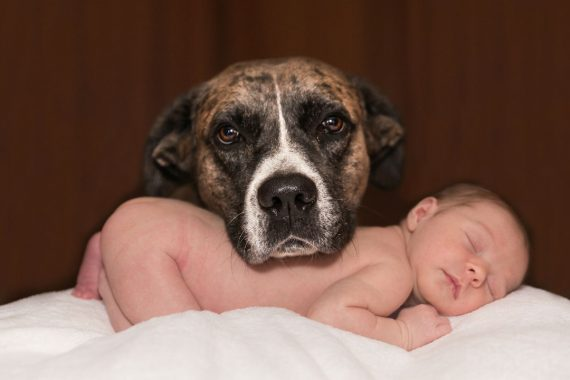 prepare-dog-for-baby