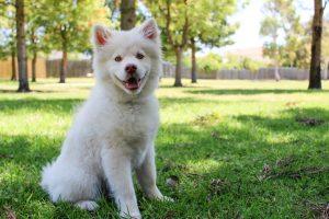 White Dog on Grass