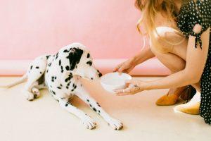 dog-loss-of-appetite
