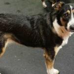 Cute-dog-Emmi
