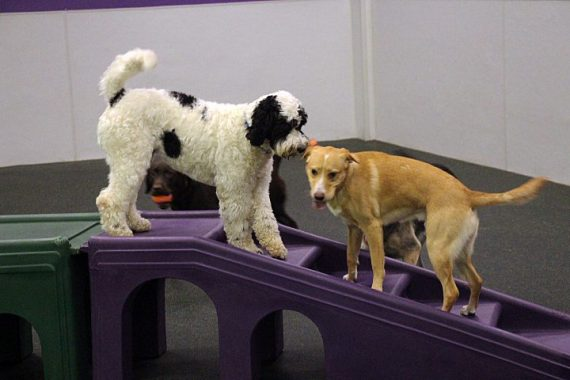 Playtime at Dogtopia Meadowvale!