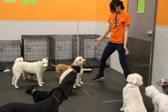 We practice door control at our Dogtopia daycares!