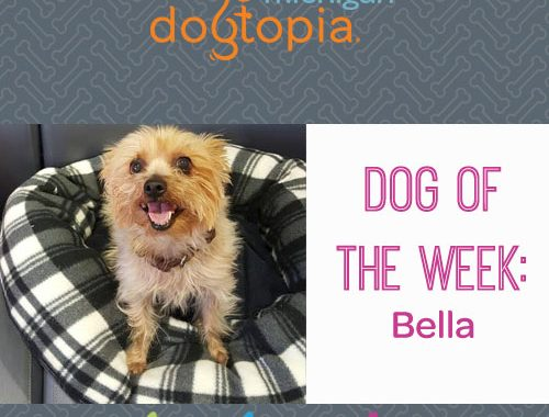 Dog Day Care Bloomfield: Dog of the Week, Bella! - Bloomfield