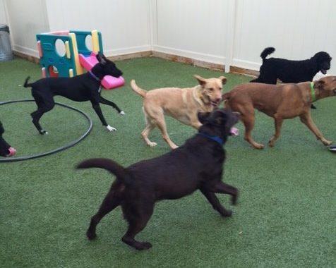 indoor dog park in birmingham mi