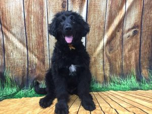 puppy socialization boarding birmingham mi