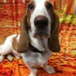 Thanksgiving Dog Care Tips