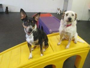 Dogtopia Birmingham Dog Day Care