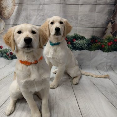 Puppy Daycare for Your Newest Family Member