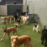 Why Talking to Dogs Matters and How Doggy Day Care Helps