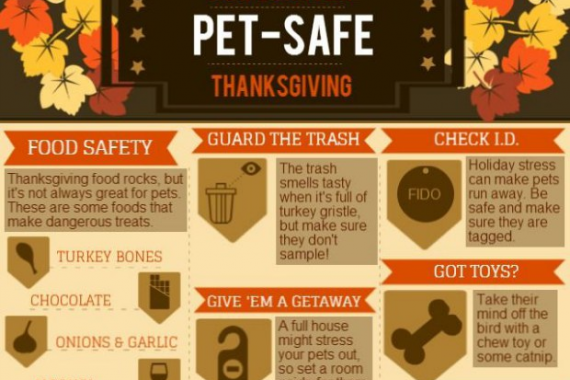 Stressed Out Students How Boarding >> Avoid Holiday Pet Emergencies With Pet Boarding Birmingham