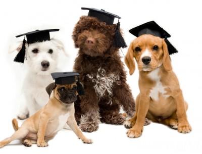Dog Adoption Events Ontario