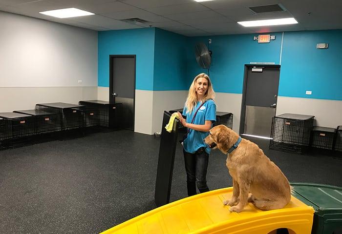 Canine Coach, Olivia, standing next to Golden Retriever