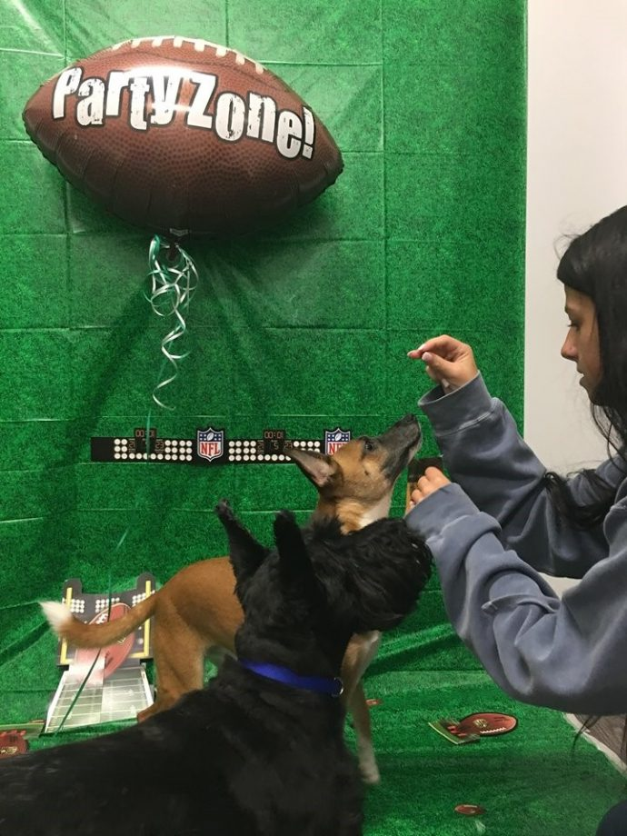 Lillian Helping Get The Dogs To Sit During One Of Our Friday Football Parties