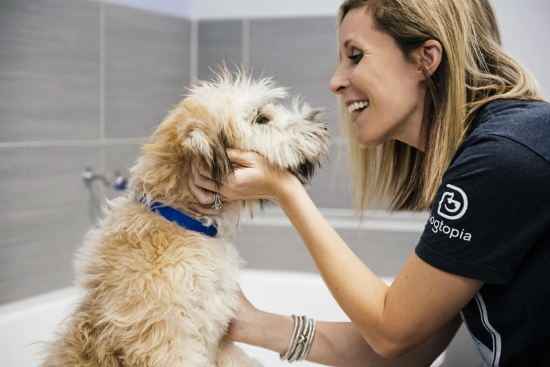 Groomer petting the Goldendoodle at Dogtopia of The Woodlands North Spa.