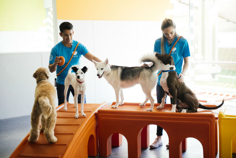 Dog behavior experts train four dogs at Dogtopia of Gilbert daycare.