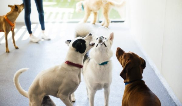 Three dogs trying to catch soap bubbles at Dogtopia of Haywood Road playroom.