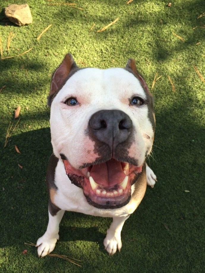 Dogtopia has no breed restrictions when it comes to daycare and boarding. We couldn't imagine if we missed out on meeting great dogs like Gunner, the Staffie.