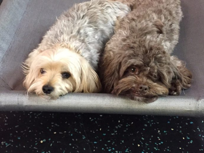 Franklin and Jack Bauer agree that Dogtopia is the best place to find your friends for life.