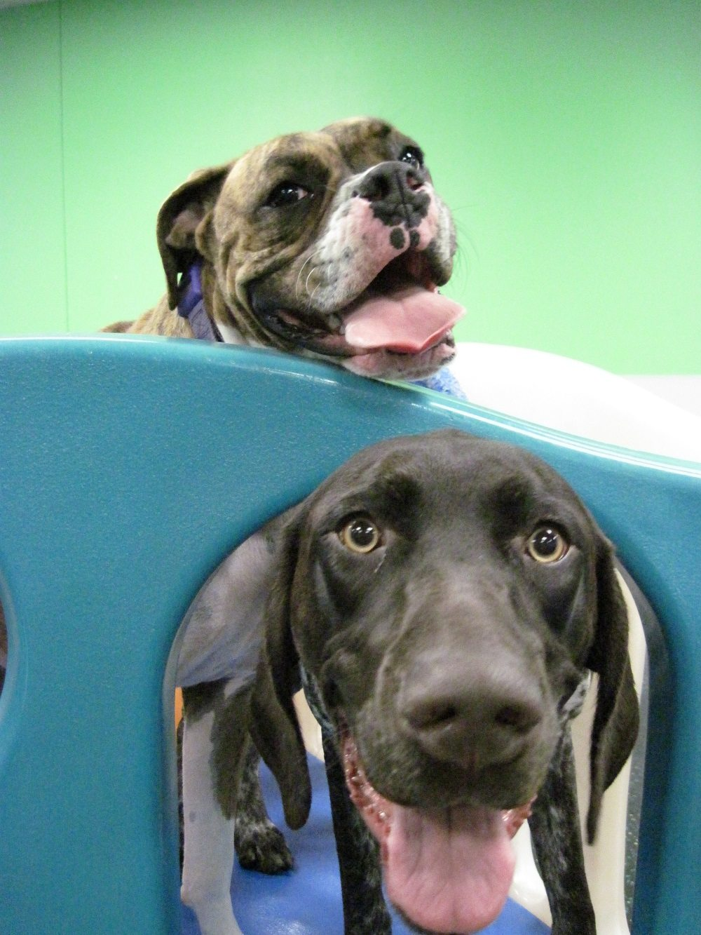 Dog Daycare Spa Boarding Austin Dogtopia Austin