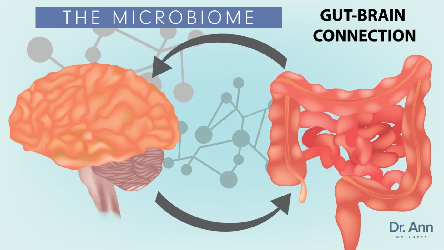 Microbiome gut brain connection 2