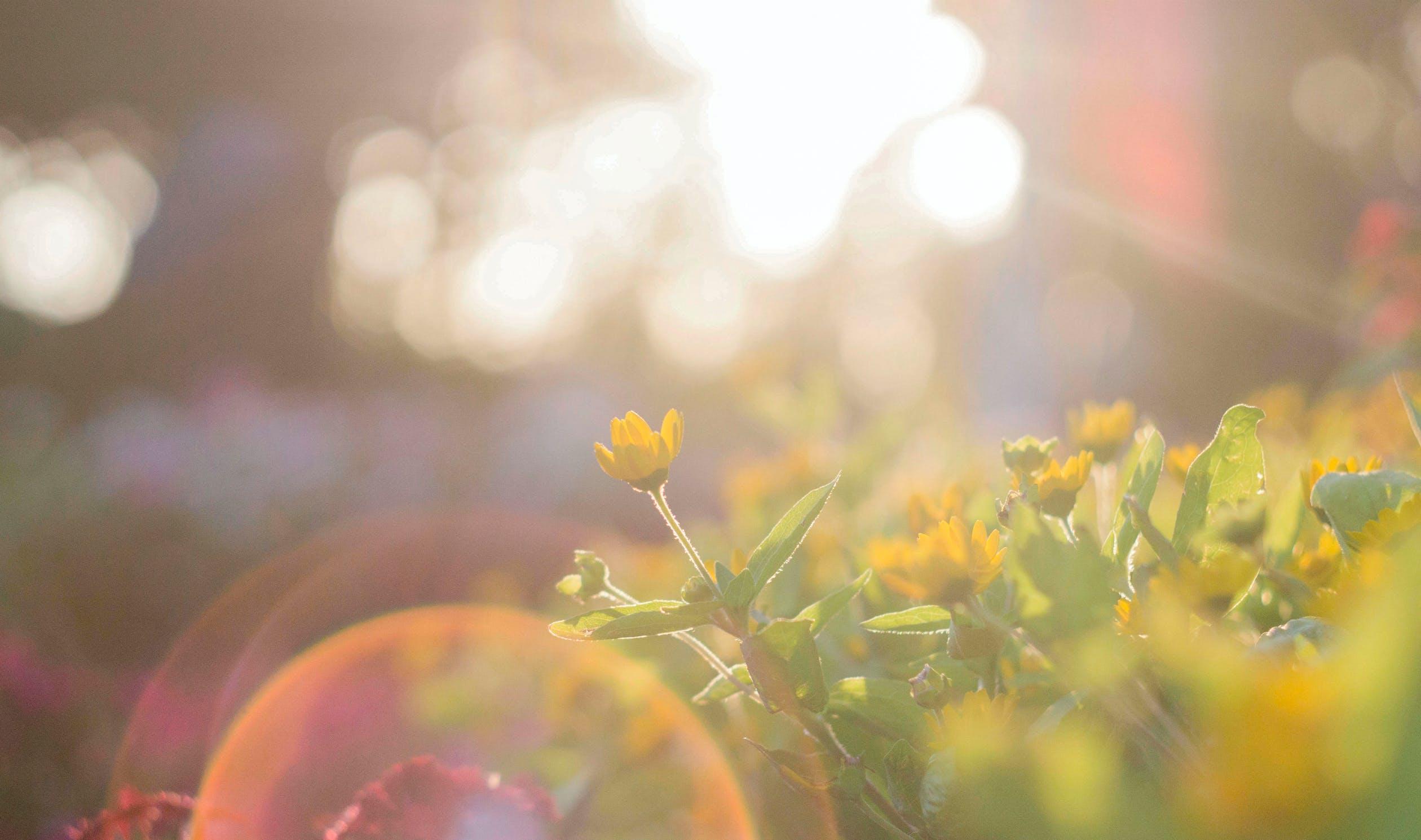 sunshine flower yellow vitamin d