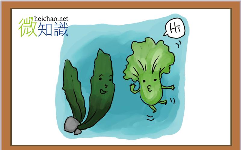 【微知識】海帶及深綠色蔬菜
