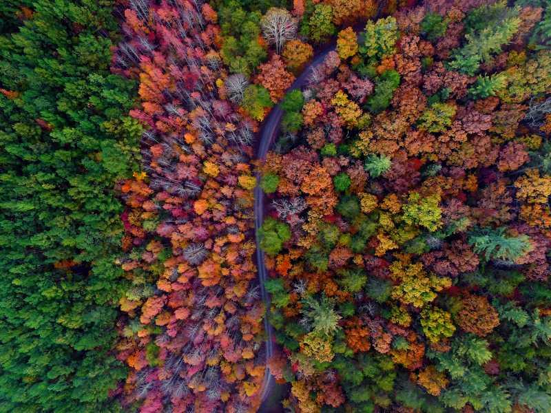 Drone Photo Dawsonville GA