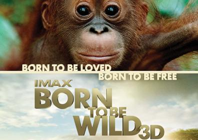 BORN TO BE WILD 3D IMAGE