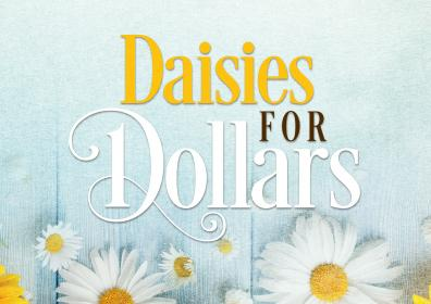 daisies for dollars