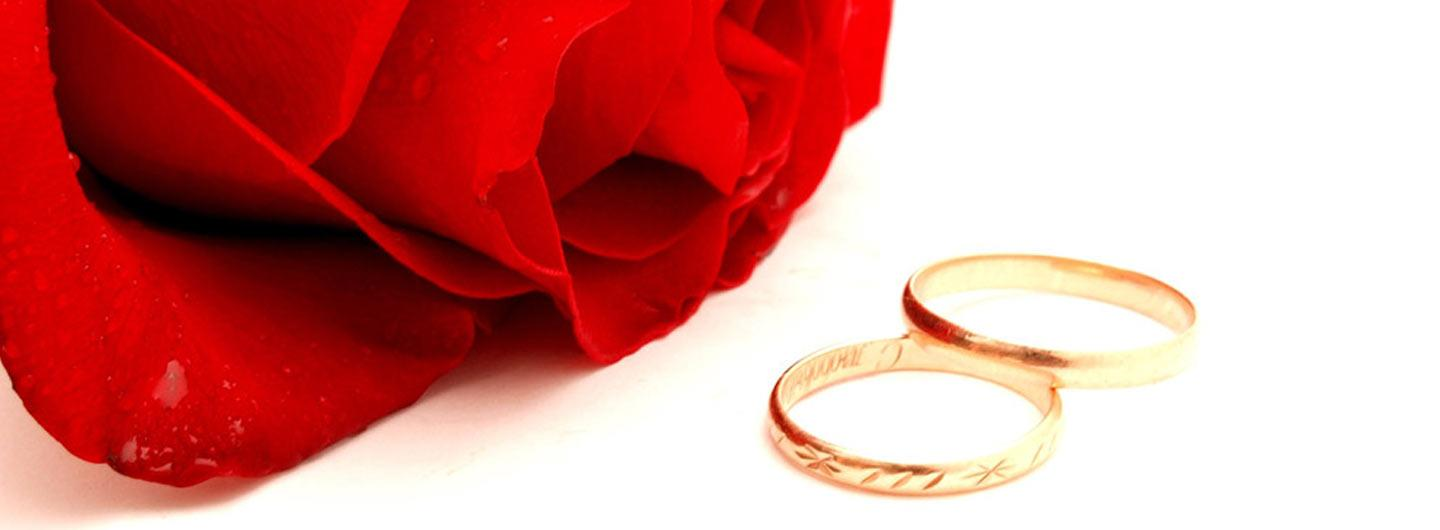 Wedding rings and a single rose
