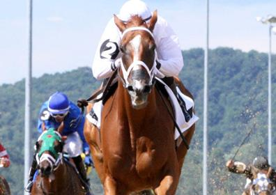 A live horse race at Mountaineer Racetrack with a horse running directly at the camera