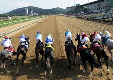 View from above the gate at the start of a live horse race at Mountaineer Racetrack