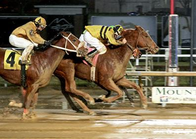 Stormy Dude racing on a muddy night at Mountaineer Racetrack