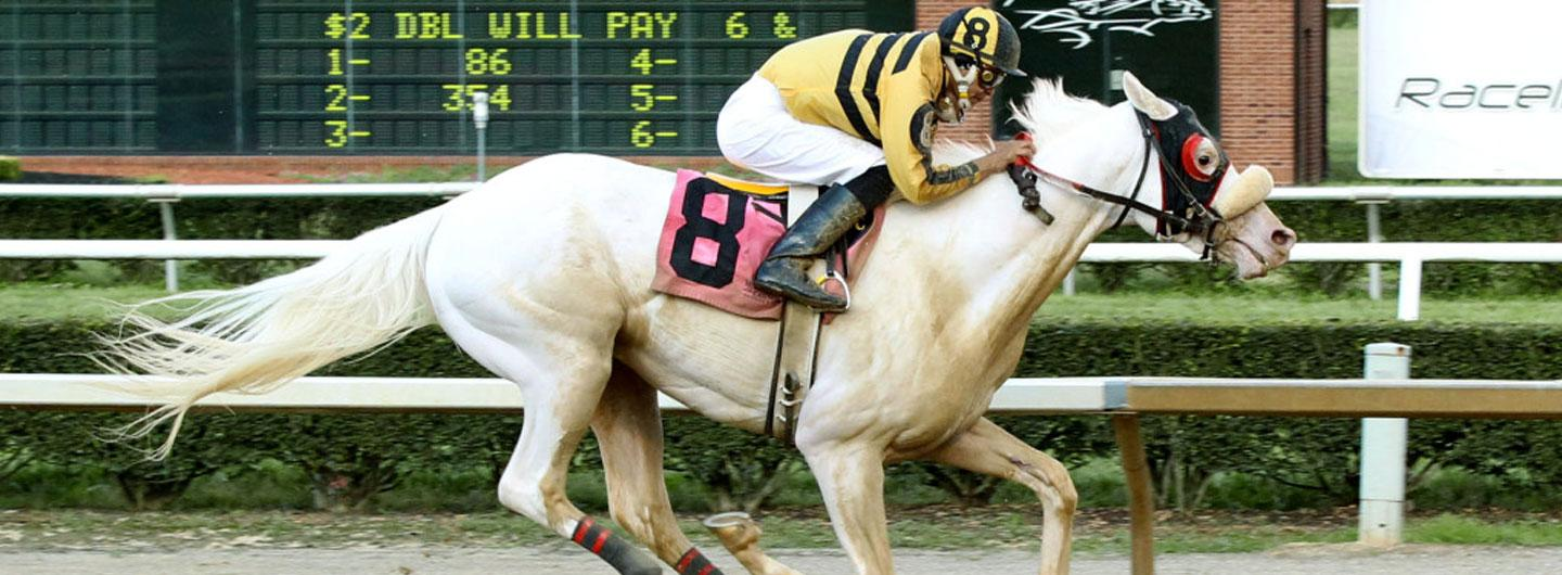 Horse Chief White Fox in a live race at Mountaineer