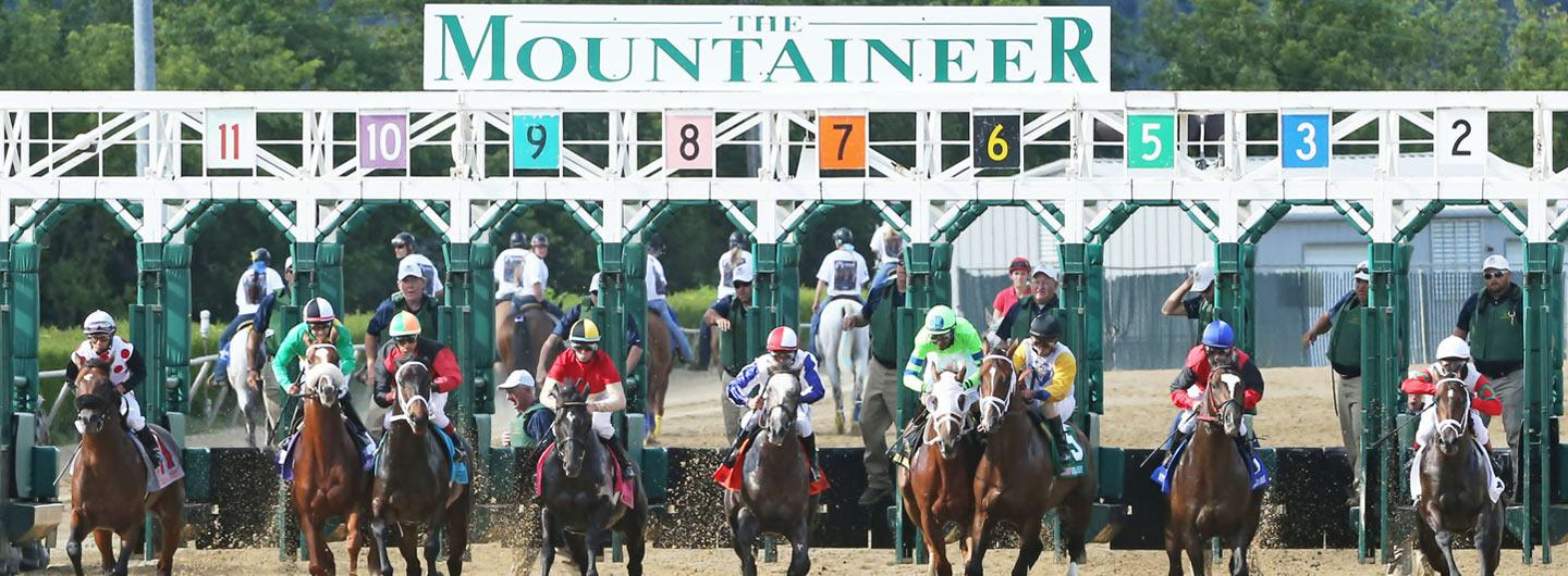 Horse race starting at the Mountaineer Racetrack