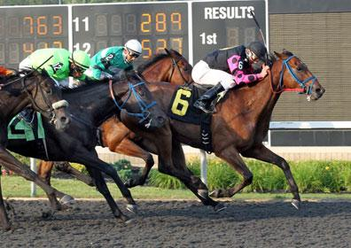 Erie Horse Racing Family Friendly Fun Presque Isle