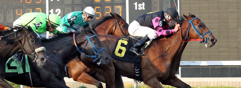 A live horse race at Presque Isle Downs & Casino