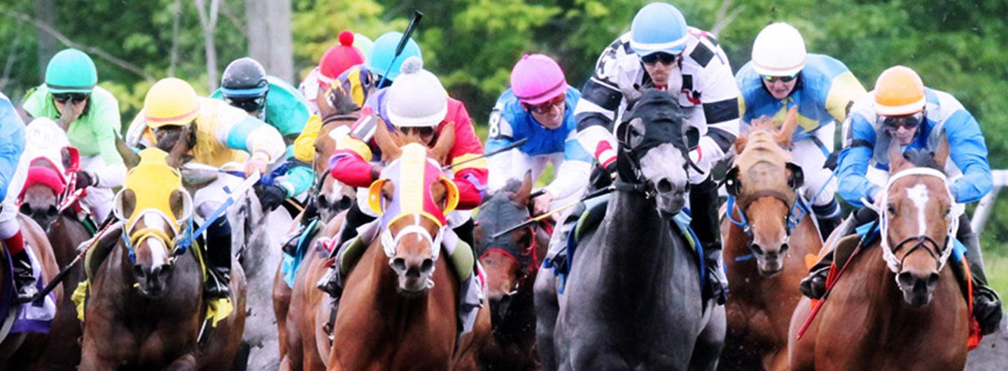 Live horse race front view at Presque Isle Downs