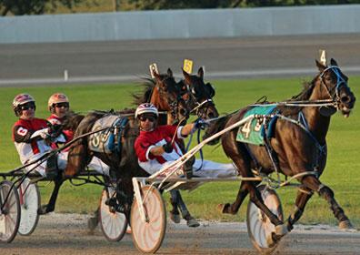 A live harness horse race