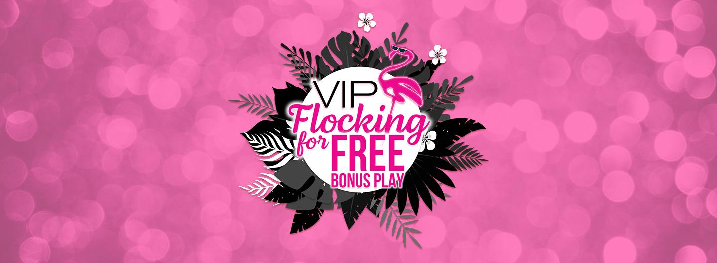 Graphic design photo featuring pink background with black feathers and logo in center