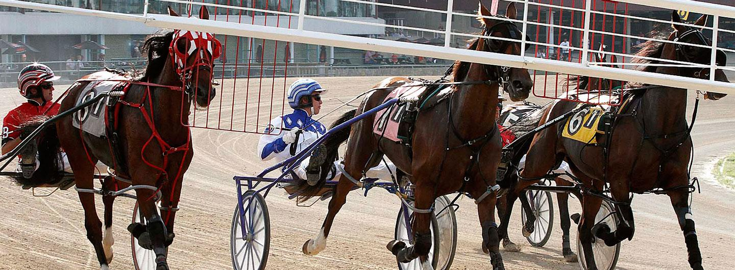 A live harness horse race behind the gate