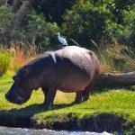 Hippowater_AfricaSafari