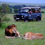 KaliandMate_AfricaWildlife_Safari